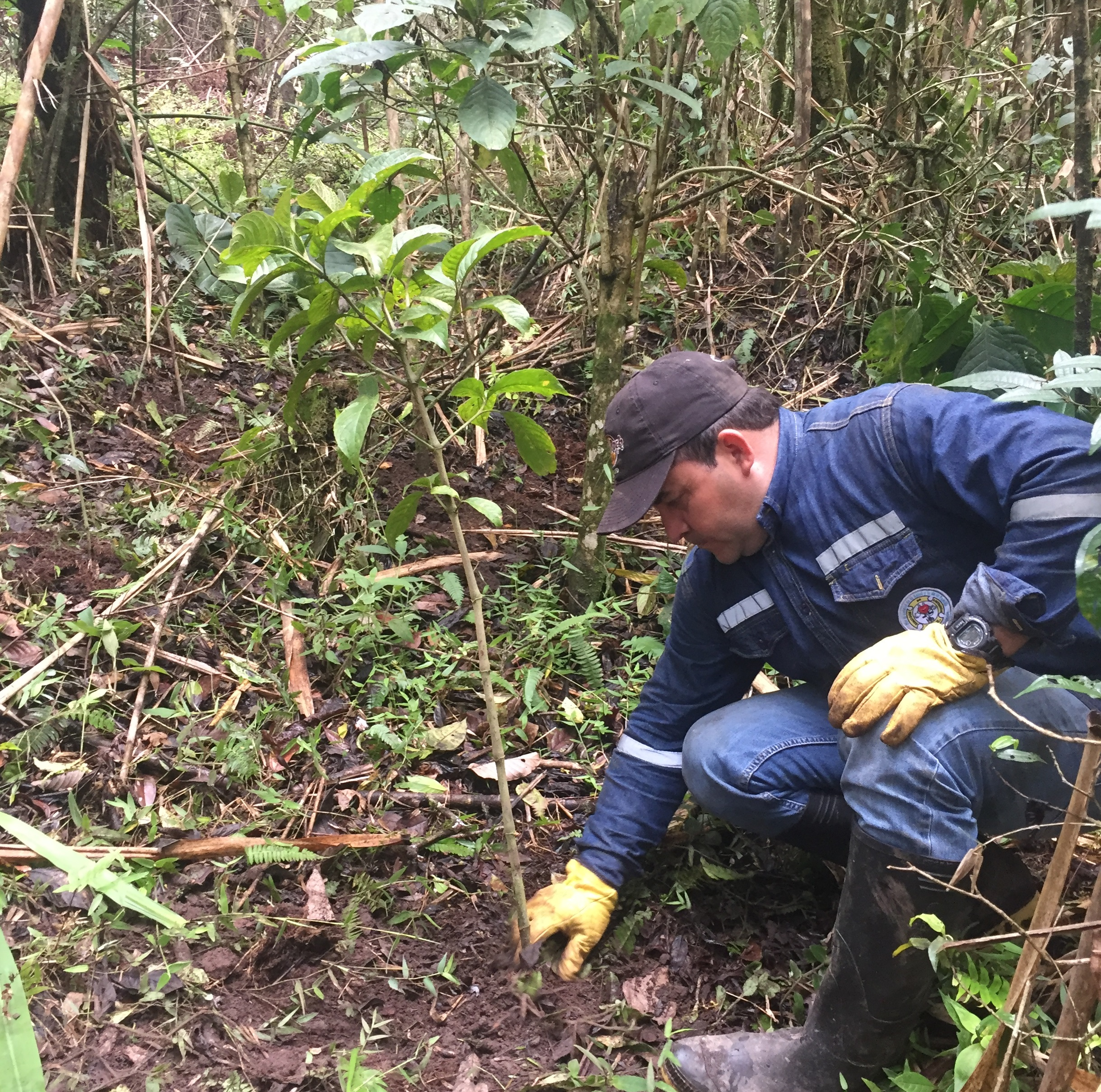 Water Source Reforestation - Cerro María Auxiliadora